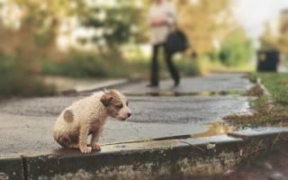 Заявка на благотворительность от центра помощи бездомным животным
